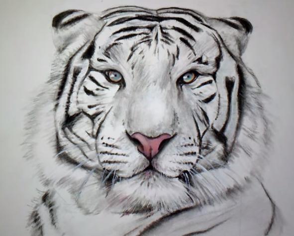 Tutoriel dessin tigre - Dessin de tigre facile ...