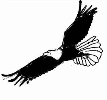Comment dessiner un faucon - Dessin de faucon ...