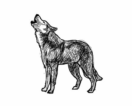 Apprendre dessiner - Un loup dessin ...