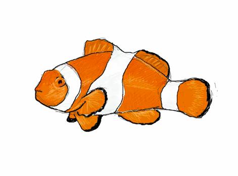 Comment dessiner un poisson clown apprendre dessiner - Dessiner un poisson facilement ...